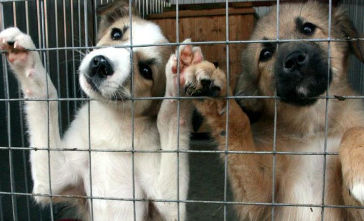 Помощь приюту для бездомных животных «Белый Бим»